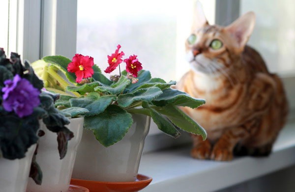 Bengal Cat Sitting With The Flowers