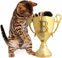 Bengal cat with a paw on a trophy