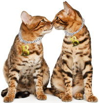The Bengal Cats Fascinating Character and Temperament